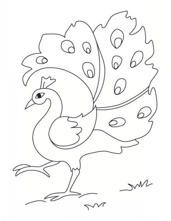 نقاشی کودکانه طاووس برای رنگ آمیزی کودکان