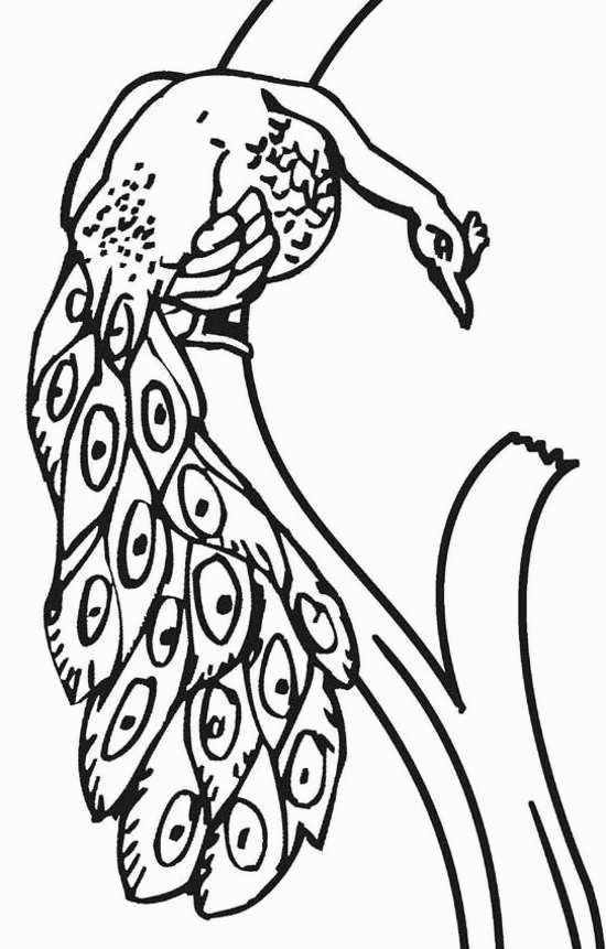 نقاشی طاووس برای بچه ها