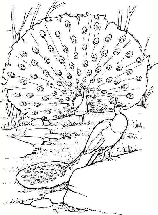 نقاشی شیک و کودکانه طاووس