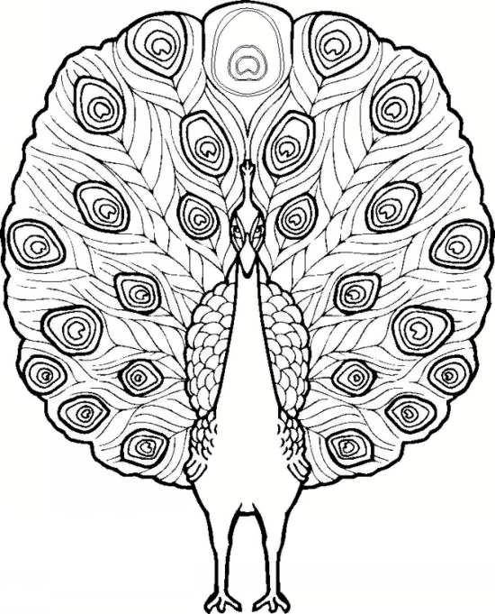 نقاشی شیک و جذاب طاووس