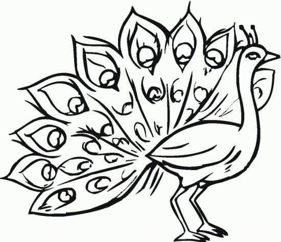نقاشی کودکانه و شیک طاووس