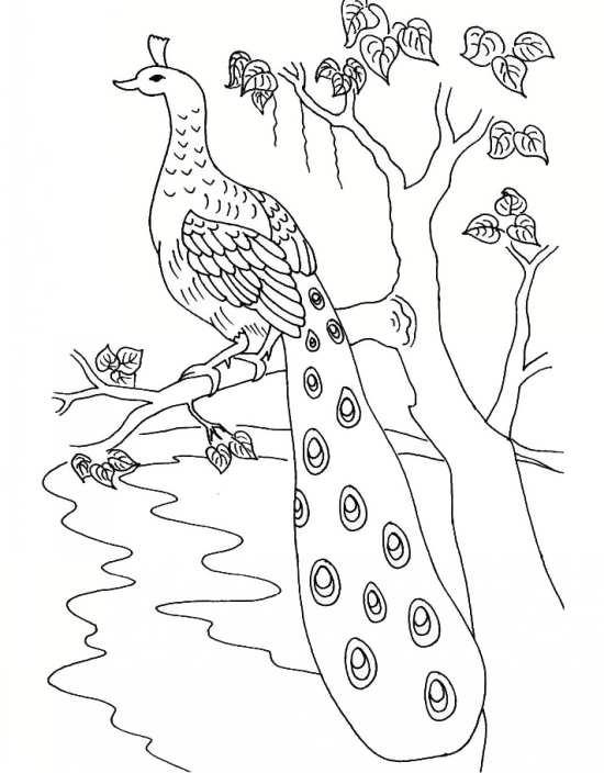 نقاشی زیبا و کودکانه طاووس
