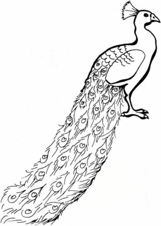 رنگ آمیزی طاووس برای کودکان