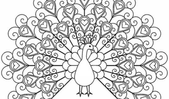 نقاشی جالب و زیبا طاووس