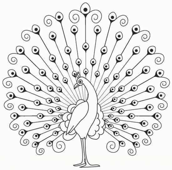 رنگ آمیزی طاووس کودکانه