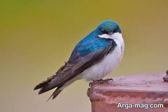 زیباترین عکس های پرندگان