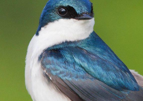 عکس پرنده مهاجر