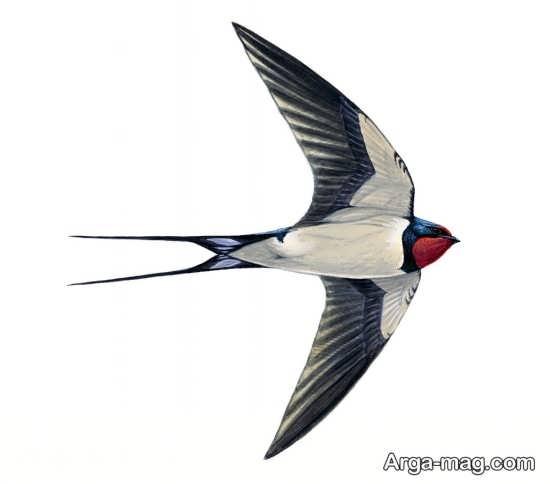 پرنده پرستو