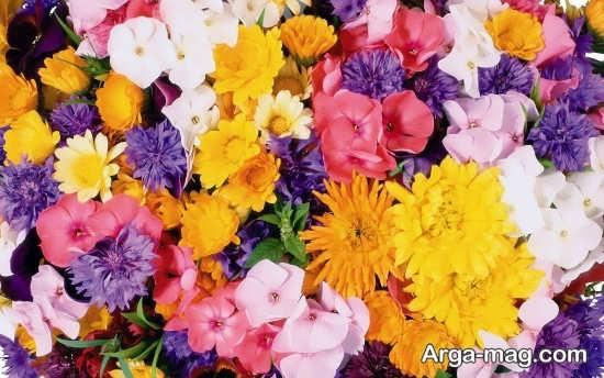 گل های رنگی زیبا