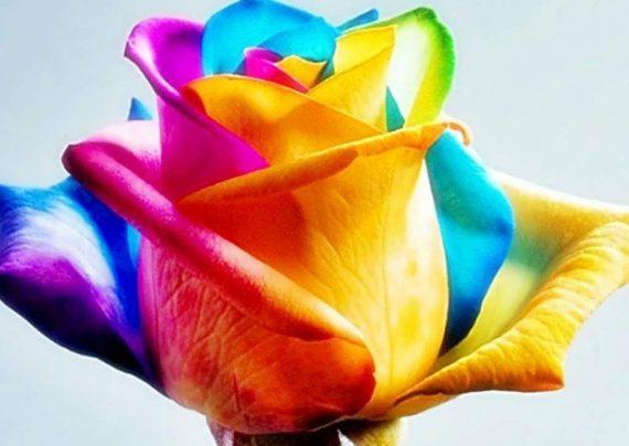 گل های رنگارنگ زیبا