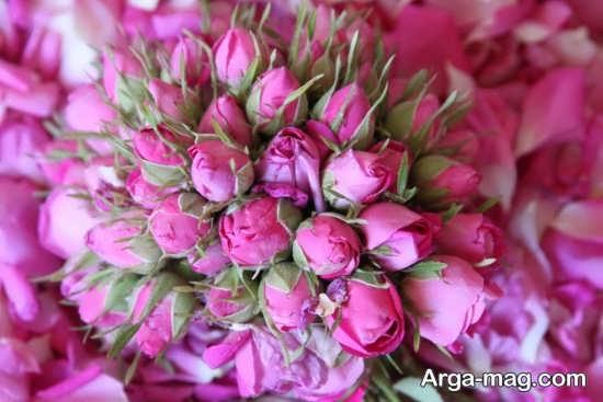تصاویر گلهای رنگارنگ