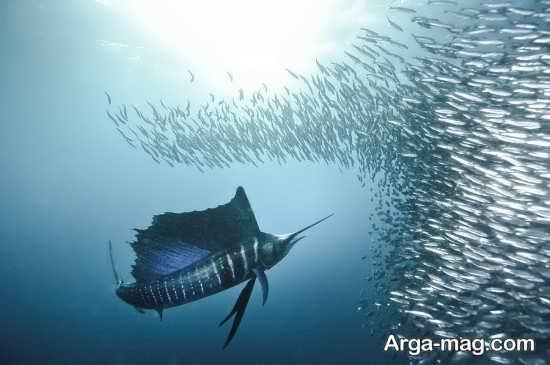 زندگانی زیر دریا