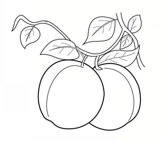 نقاشی میوه های مختلف و انواع رنگ آمیزی میوه برای کودکان