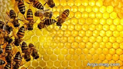 خواص عسل در درمان خانگی مسمومیت