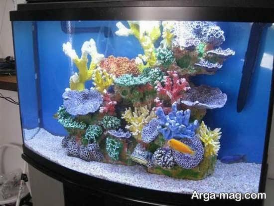 تزیین آکواریوم مرجانی
