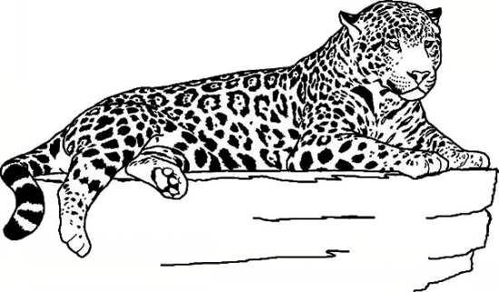 نقاشی جالب و جذاب پلنگ