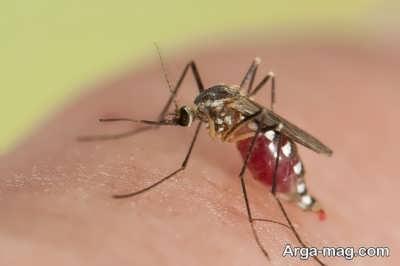 راه های درمان خانگی نیش حشرات