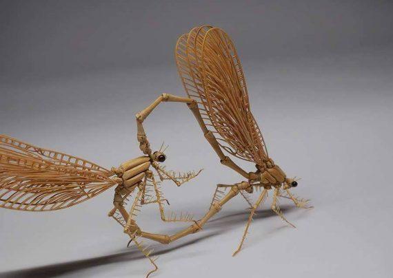 درمان خانگی نیش حشرات