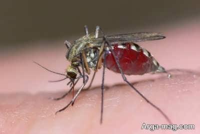 راه حل های درمان نیش حشرات