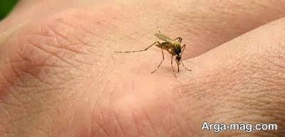 چگونه نیش حشرات را با درمان های خانگی از بین ببریم؟