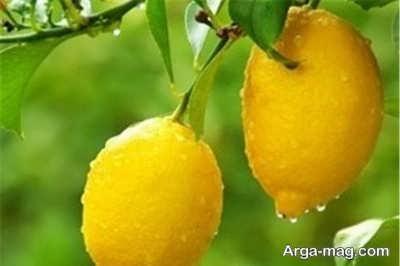 از بین بردن زردی زردچوبه روی پوست مهمترین خواص لیمو ترش برای پوست و تاثیر آن بر زیبایی
