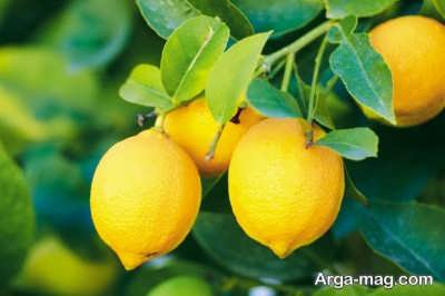 سلامت پوست را با لیمو ترش تامین کنید