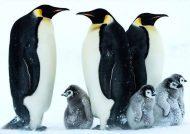 نقاشی پنگوئن