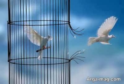 متن زیبا در مورد آزادی