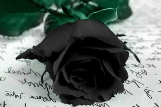 عکس گلهای زیبا برای پروفایل