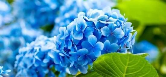 گلهای زیبا برای پروفایل
