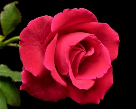 عکس گلهای زیبا برای پروفایل آدم های با انرژی و پراحساس
