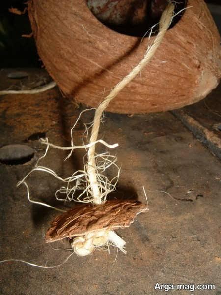 ساخت لانه برای پرنده با پوسته نارگیل