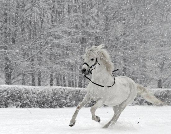 عکس پروفایل اسب سفید