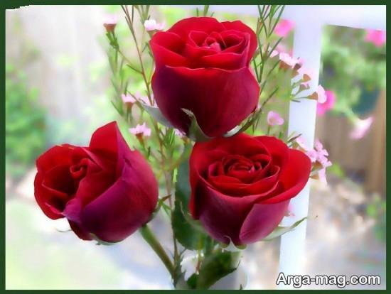 عکس رز عاشقانه قرمز برای پروفایل