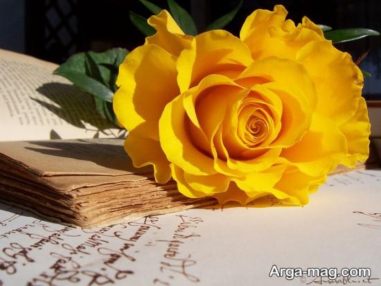 عکس رز زرد