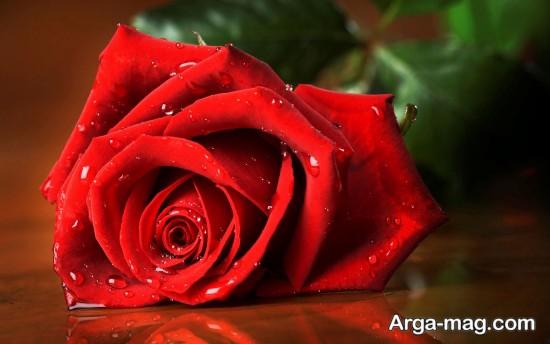 عکس گل رز عاشقانه زیبا