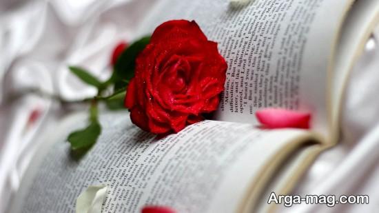عکس رز قرمز عاشقانه برای پروفایل