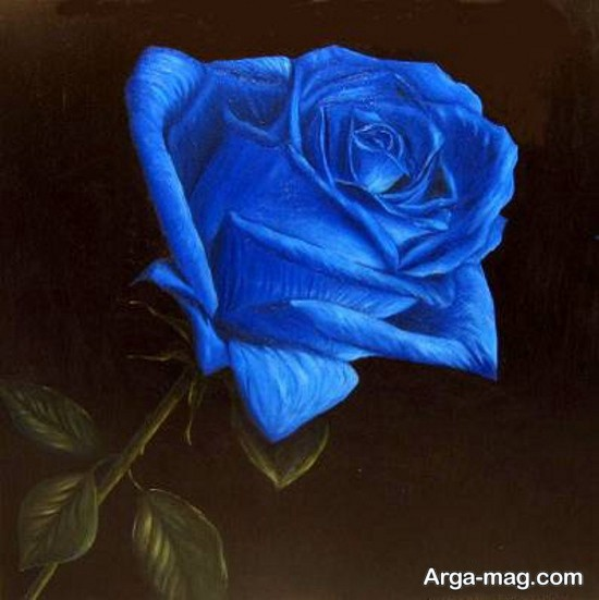 عکس رز آبی زیبا
