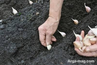 قرار دادن سیرچه در زمین