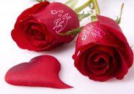گالری عکس گل رز عاشقانه زیبا و تماشایی
