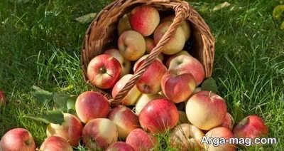 با خوردن سیب لاغر شوید