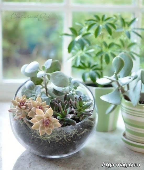 باغ شیشه ای زیبا