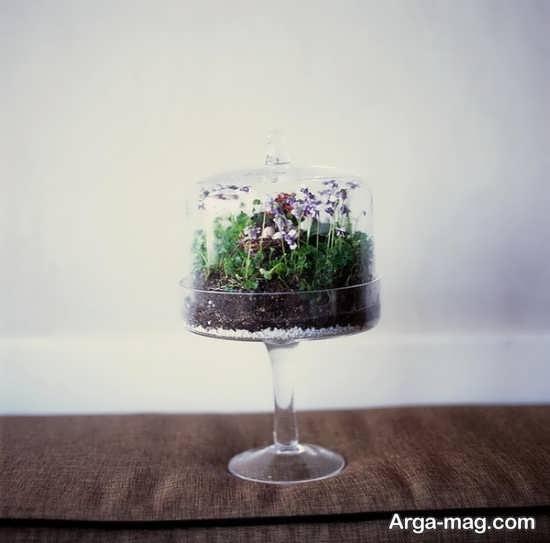تراریوم ساخته شده از ظرف کیک