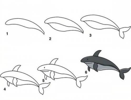 مراحل کشیدن نقاشی زیبا دلفین