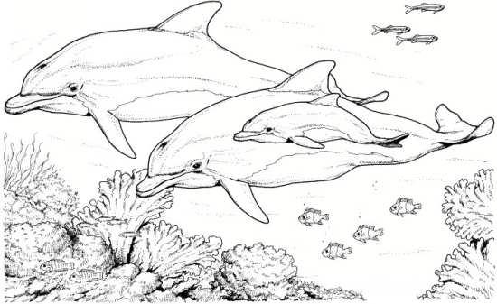 نقاشی و رنگ آمیزی کودکانه دلفین