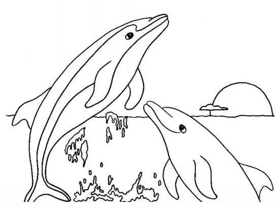 نقاشی دلفین برای بچه ها
