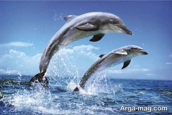 عکس زیبا از دلفین