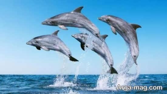 عکاسی مستند دلفین