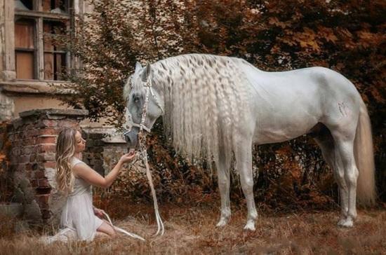 پروفایل اسب