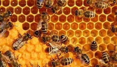 خواص عسل برای معده را بشناسید